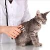 Ветеринарные клиники в Гуково